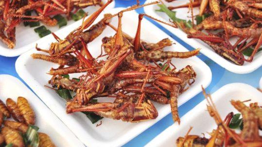 Eat2Gather wEETje welke insecten je kunt eten?